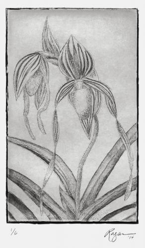 "Ragan Brown""Orchid (Paphiopedilum Philippinense X Paph. Sanderianum)"", 2014Intaglio Print4 x 6in."